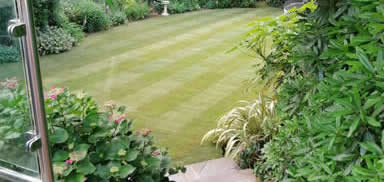 lawn turfing bournemouth lawn laying